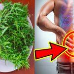 Bài thuốc chữa đau lưng bằng cây đinh lăng nên biết
