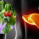 Cà gai leo, giúp phục hồi chức năng gan, ức chế Virut viêm gan B