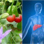 Chữa Bệnh Xơ Gan Cổ Chướng – Điều Trị Triệt Để Bệnh Xơ Gan – Đã Có Phác Đồ Điều Trị Mới