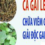 Cao Cà Gai Leo Cty Minh Nhi loại đặc biệt nguyên chất 100%